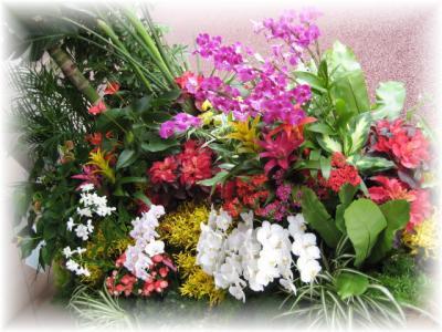 2011年9月22日お花