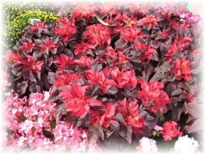 2011年9月22日赤い花