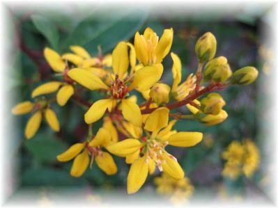 2011年10月27日黄色い花