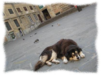 2012年1月8日犬