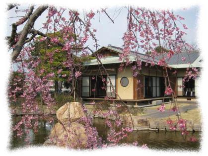 2012年4月5日野添北公園④