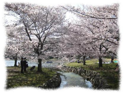 2012年4月12日明石公園の桜