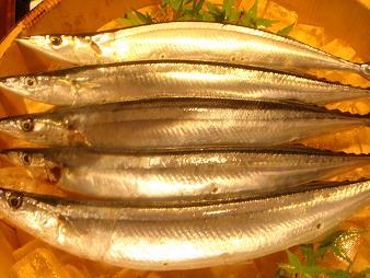 秋刀魚bu
