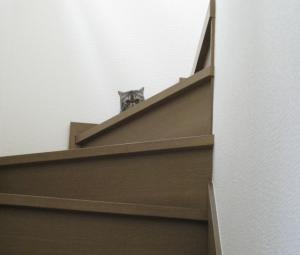 階段の上のブリ