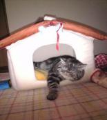 ぶりた爆睡1