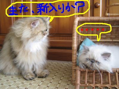 じゃっくん&キウイちゃん2