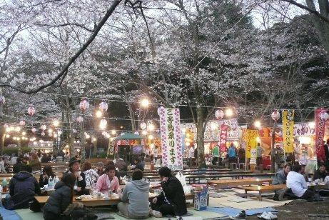 桜山での夜桜見物