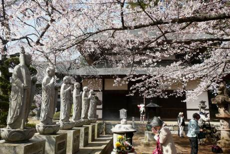 六地蔵と桜