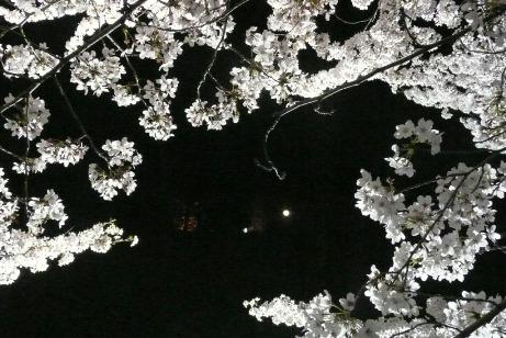夜桜と満月(中央右手が月だよ!)