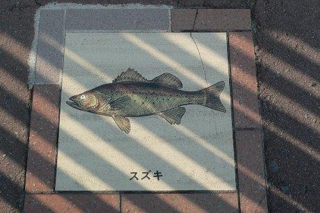 橋のたもとの魚達