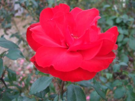034_convert_20111103221157.jpg