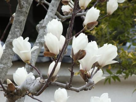 2012-03-20+(14)_convert_20120320174236.jpg