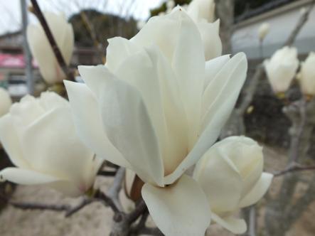 2012-03-20+(17)_convert_20120320174555.jpg