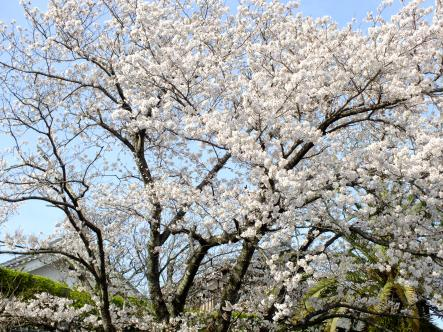 2012-04-02+(186)_convert_20120403145728.jpg