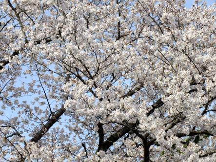 2012-04-02+(193)_convert_20120403150714.jpg