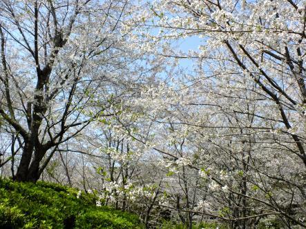 2012-04-05+(75)_convert_20120406154618.jpg