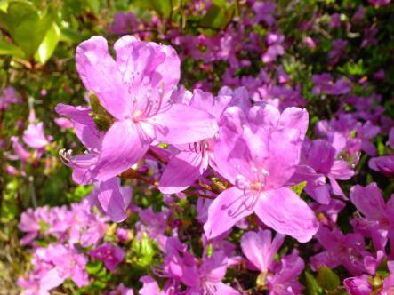 2012-04-18+(47)_convert_20120419112724.jpg