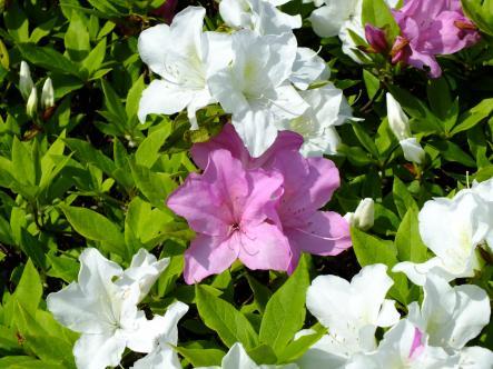 2012-04-18+(72)_convert_20120422174059.jpg
