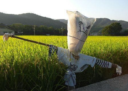 08kakashi06.jpg