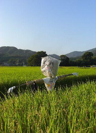 08kakashi11.jpg