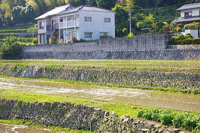 2008年田植え