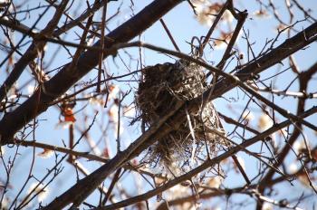 鳥の巣_0573
