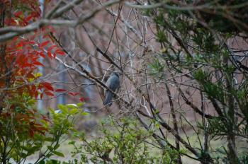 鳥_0632