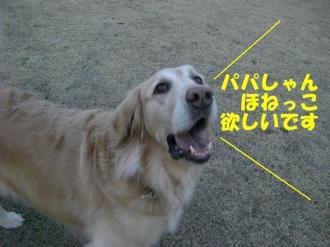 3月10日  散歩 041 ブログ