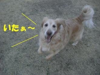 3月10日  散歩 038  ブログ
