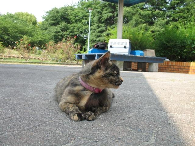 CatKingdom-Me-4.jpg