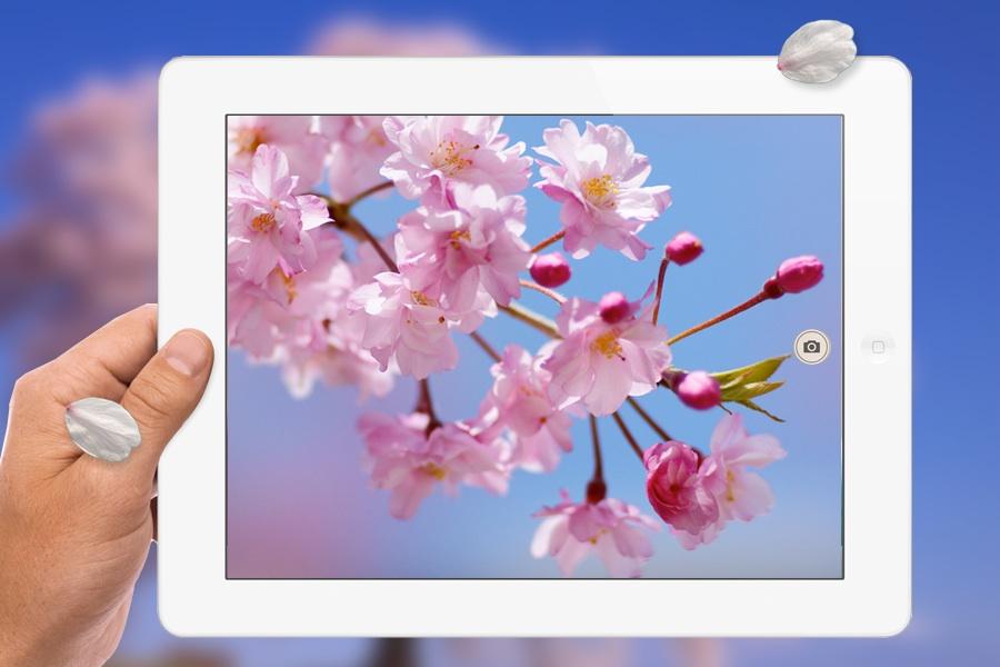 Sakura-iPad.jpg