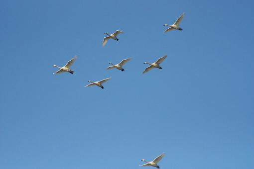 水鳥公園'09.03.01-1