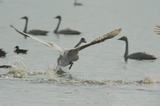 水鳥公園'09.03.01-3