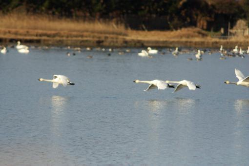 水鳥公園'09.03.01-6
