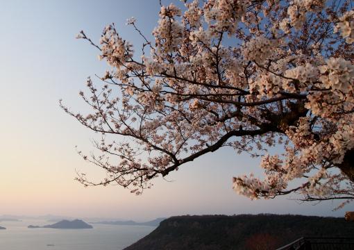 屋島の桜'09.04.02-2