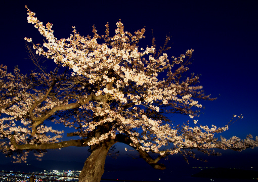 屋島の夜桜'09.04.02-1
