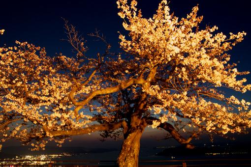 屋島の夜桜'09.04.02-2