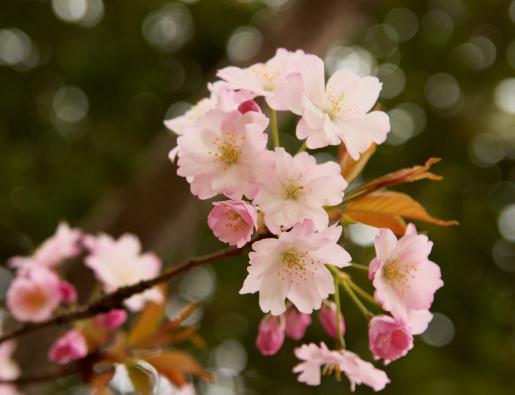 屋島神社'09.04.03-3