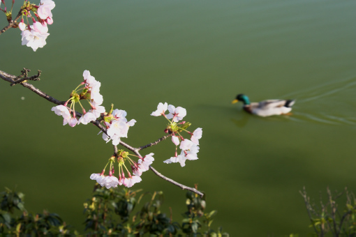亀鶴公園'09.04.05-3