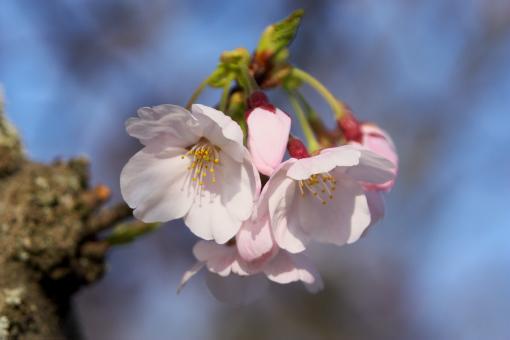 亀鶴公園'09.04.05-4