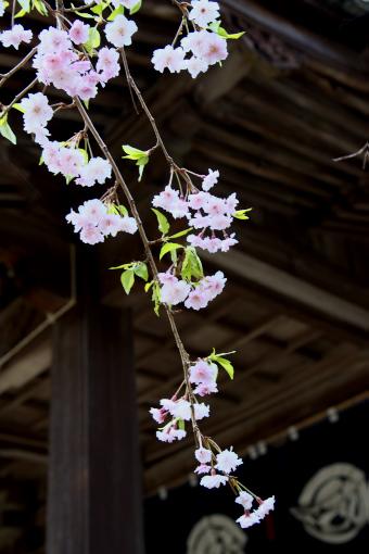 多和神社'09.04.10-1