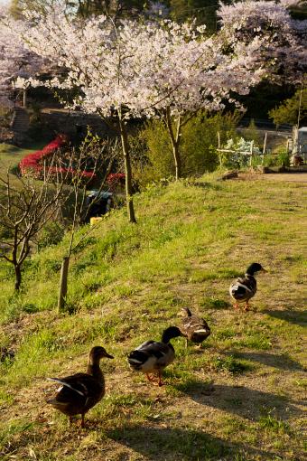 多和神社'09.04.10-3