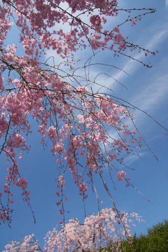 満濃森林公園'09.04.11-4