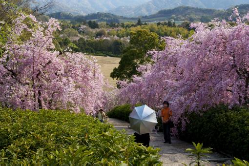 満濃森林公園'09.04.11-5