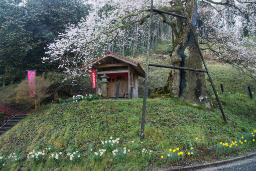 岩井畝の大桜'09.04.13-1