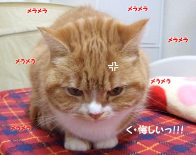 画像 77182 (8)のコピー