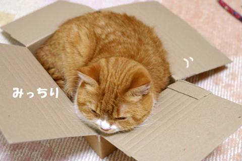 箱2のコピー