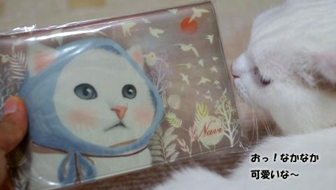 白猫ちゃんのコピー