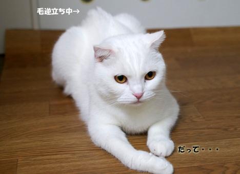ke のコピー