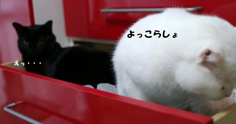 白黒こんびコピー